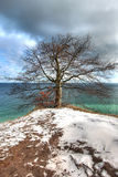 Wintry tree by scenic ocean. Scenic view of tree on snowy coastline by Baltic sea, under dark cloudscape stock photography