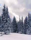 Wintry vintage landscape. In the mountains Royalty Free Stock Images