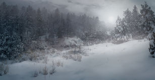 Wintry Wonder. A chilling wintry snow scene taken atop Mount Taylor, New Mexico Royalty Free Stock Photo