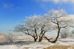 Wintter drzewo Obraz Stock