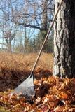 Świntuch Opiera Przeciw drzewu Fotografia Royalty Free