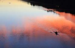 Wioślarskie sylwetki na rzece Obrazy Stock