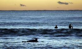 wiosłować surfingowów. Zdjęcie Royalty Free