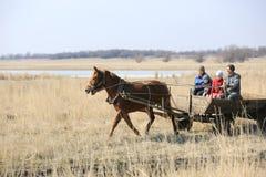Wiosek rodzinne przejażdżki przez wiosny pola w końskiej furze dalej Zdjęcie Royalty Free