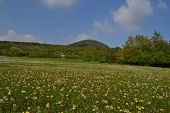 Wiosen łąki w okwitnięciu, republika czech, Europa fotografia royalty free