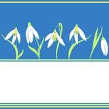 Wiosen śnieżyczki kwitną na błękitnym tle Obrazy Stock