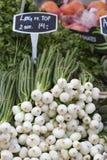 Wiosen cebule także znać jako Sałatkowe cebule, Scallions lub Zielony Oni, Obrazy Royalty Free