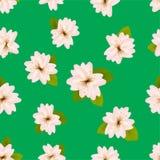 Wiosen Czereśniowi okwitnięcia Bezszwowy wzór z Japaneseï ¿ ½ Sakura Menchia kwitnie na zielonym tle Romantyczna wektorowa ilustr Obraz Royalty Free