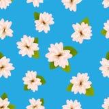 Wiosen Czereśniowi okwitnięcia Bezszwowy wzór z japończykiem Sakura Menchia kwitnie na błękitnym tle Romantyczna wektorowa ilustr Fotografia Royalty Free