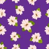 Wiosen Czereśniowi okwitnięcia Bezszwowy wzór z japończykiem Sakura Menchia kwitnie na purpurowym tle Romantyczna wektorowa ilust Fotografia Royalty Free