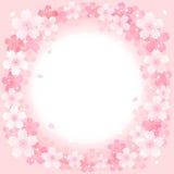 Wiosen Czereśniowych okwitnięć okręgu Różowy tło ilustracja wektor