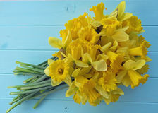 Wiosen daffodils Fotografia Stock