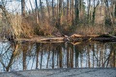 Wiosen drzew odbicie Obraz Stock