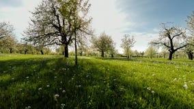 Wiosen drzew rośliien natury tła lata widok z lotu ptaka zdjęcie wideo
