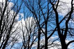 Wiosen drzew sylwetki w lesie przeciw chmurnemu niebu Zdjęcie Royalty Free