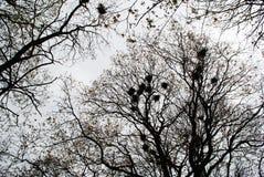 Wiosen drzewa Obrazy Royalty Free