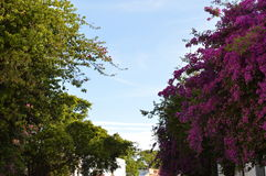 Wiosen drzewa Obraz Royalty Free