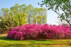 Wiosen drzewa i kwiaty Obraz Royalty Free