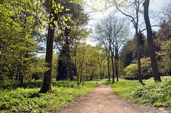 Wiosen drzewa i parkowe ścieżki Obrazy Stock