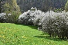 Wiosen drzewa w łące Wiosna Zdjęcie Stock
