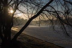 Wiosen drzewa w ranku i staw Obraz Royalty Free