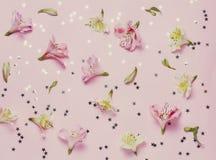 Wiosen flovers i magii gwiazdy na różowym tle Odgórny widok, mieszkanie nieatutowy Zdjęcie Stock
