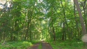 Wiosen lasowi i zieleni drzewa przy słonecznym dniem, Polska zdjęcie wideo