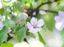 Wiosen piękne kwitnie gałąź Wiosny tło z bliska Wiosny kwiecenie Fotografia Royalty Free