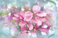 Wiosen piękne kwitnie gałąź Wiosny tło z bliska Wiosny kwiecenie Zdjęcia Stock