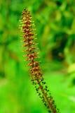 Wiosen rośliny zdjęcie stock