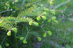 Wiosen rośliny Fotografia Stock