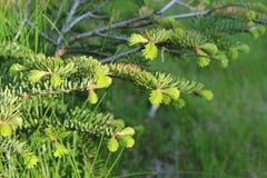Wiosen rośliny Obraz Royalty Free