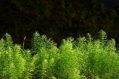 Wiosen zielenie blisko wody zdjęcie royalty free