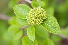 Wiosen zielone rośliny Zdjęcia Stock
