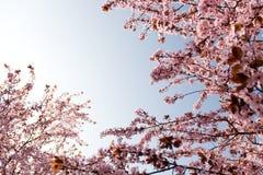 wiosenne razem piękno Zdjęcia Royalty Free