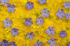 wiosenne tła niebieski kolor żółty Zdjęcia Royalty Free