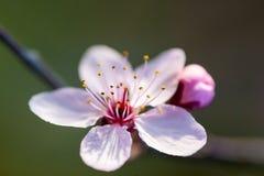 wiosenne tła piękna ilustracyjny wektora Fotografia Stock