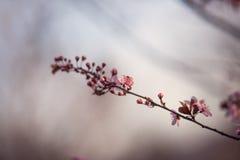 wiosenne tła piękna ilustracyjny wektora Fotografia Royalty Free
