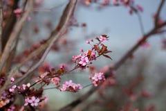 wiosenne tła piękna ilustracyjny wektora Zdjęcia Stock