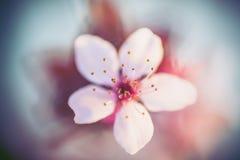 wiosenne tła piękna ilustracyjny wektora Obraz Stock