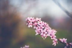 wiosenne tła piękna ilustracyjny wektora Obraz Royalty Free