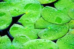 wiosenny deszcz Zdjęcia Stock