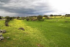 wiosenny deszcz Obraz Royalty Free