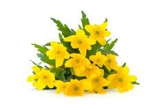 wiosenny kwiat żółty fotografia royalty free