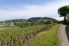 Wioska Pernand Vergelesses w Burgundy Fotografia Stock