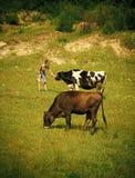 Wioska, uprawiający ziemię, śródpolny pasanie, wołowiny mięso zdjęcie stock