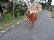Wioski scena Bangladesz Obrazy Stock