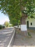 Wioski ulica z drzewami Zdjęcia Stock