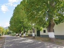 Wioski ulica z drzewami Fotografia Royalty Free