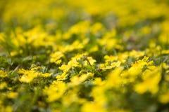 Wiosna łąka 3 Obraz Royalty Free